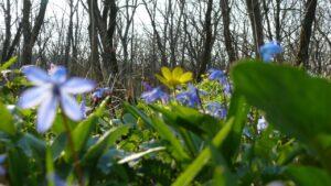 Кочережки весной