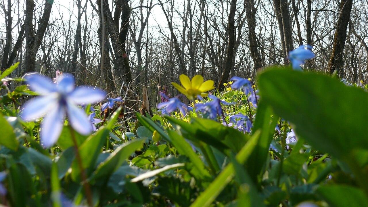 Самара в Кочережках весной