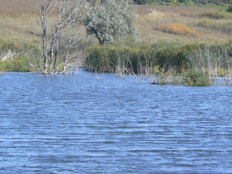 платная рыбалка дикий карп фото