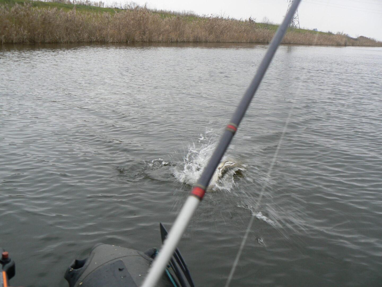при северном ветре клюет рыба