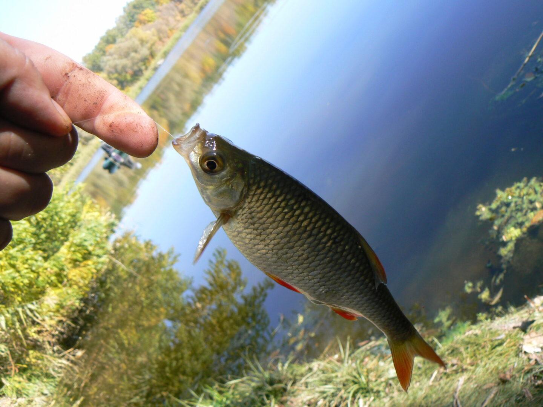 красноперка рыба весной