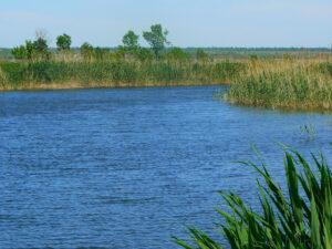 Река Волчья Васильковка