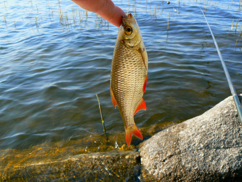 поплавки для рыбалки на реке фото