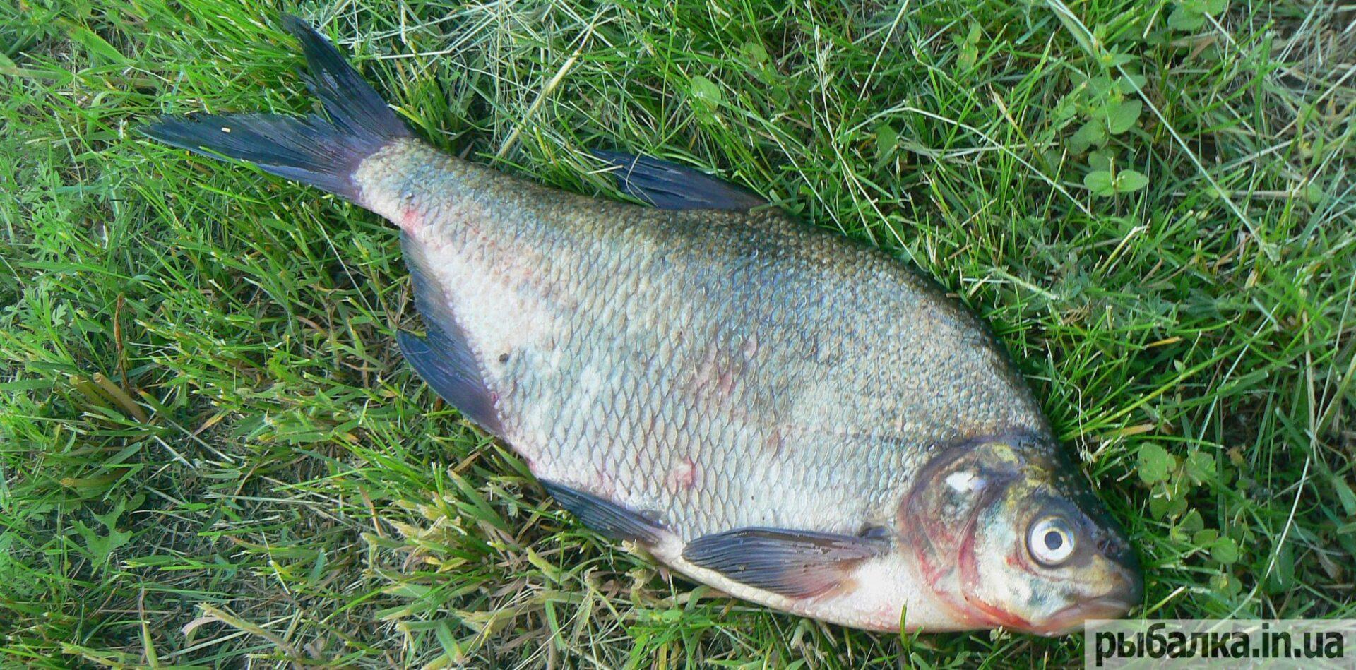 какая рыба клюет в пасмурную погоду