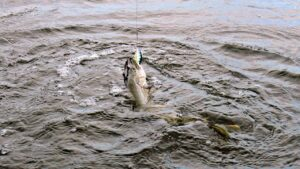 Рыбалка на щуку в ноябре борьба фото