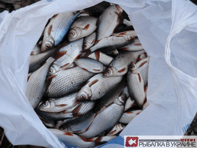 Экстремальный улов на рыбалке по последнему льду