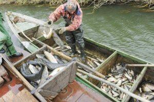 Промышленный лов рыбы в Украине