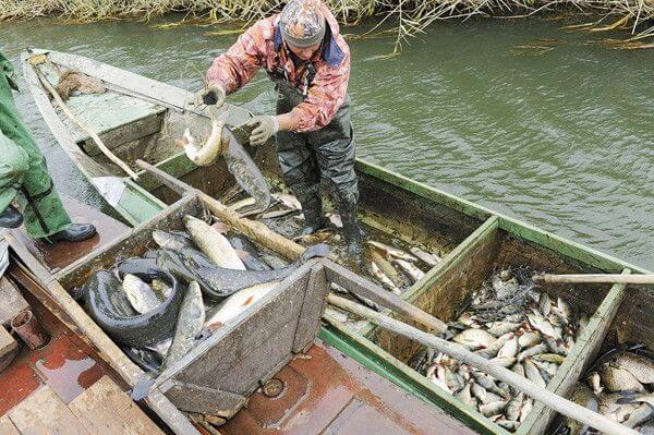 Промышленный лов рыбы в Украине/ рыбалка 2017