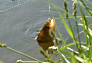 Ловля окуня / Рыбалка на окуня / Окунь фото