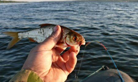 Рыбалка на Днепре / За осенней плотвой!