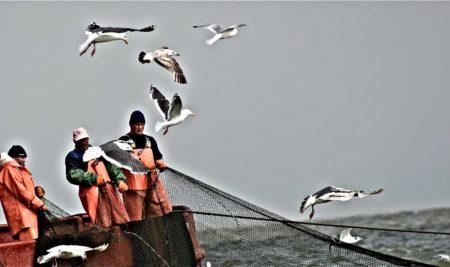 Куда девается наша рыба? Страшные и шокирующие цифры