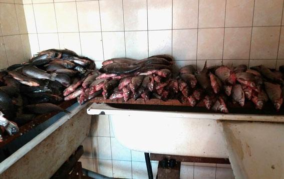 Промысловики браконьеры