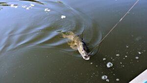 Щука в августе Рыбалка в Украине