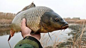 Ловля карпа на колбасу / Рыбалка в Украине фото