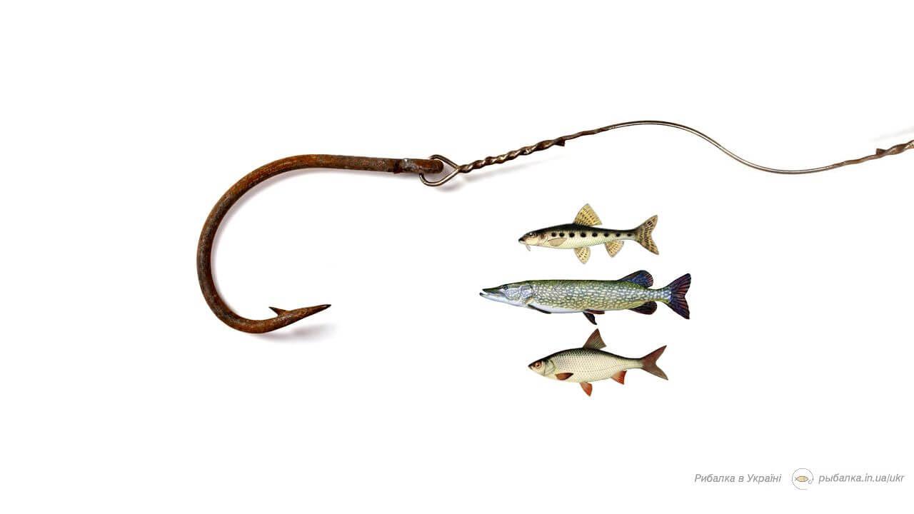 Вылов рыбы в Украине