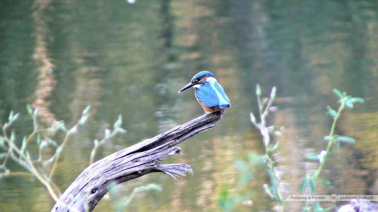 Фото Пташка на Дніпрі