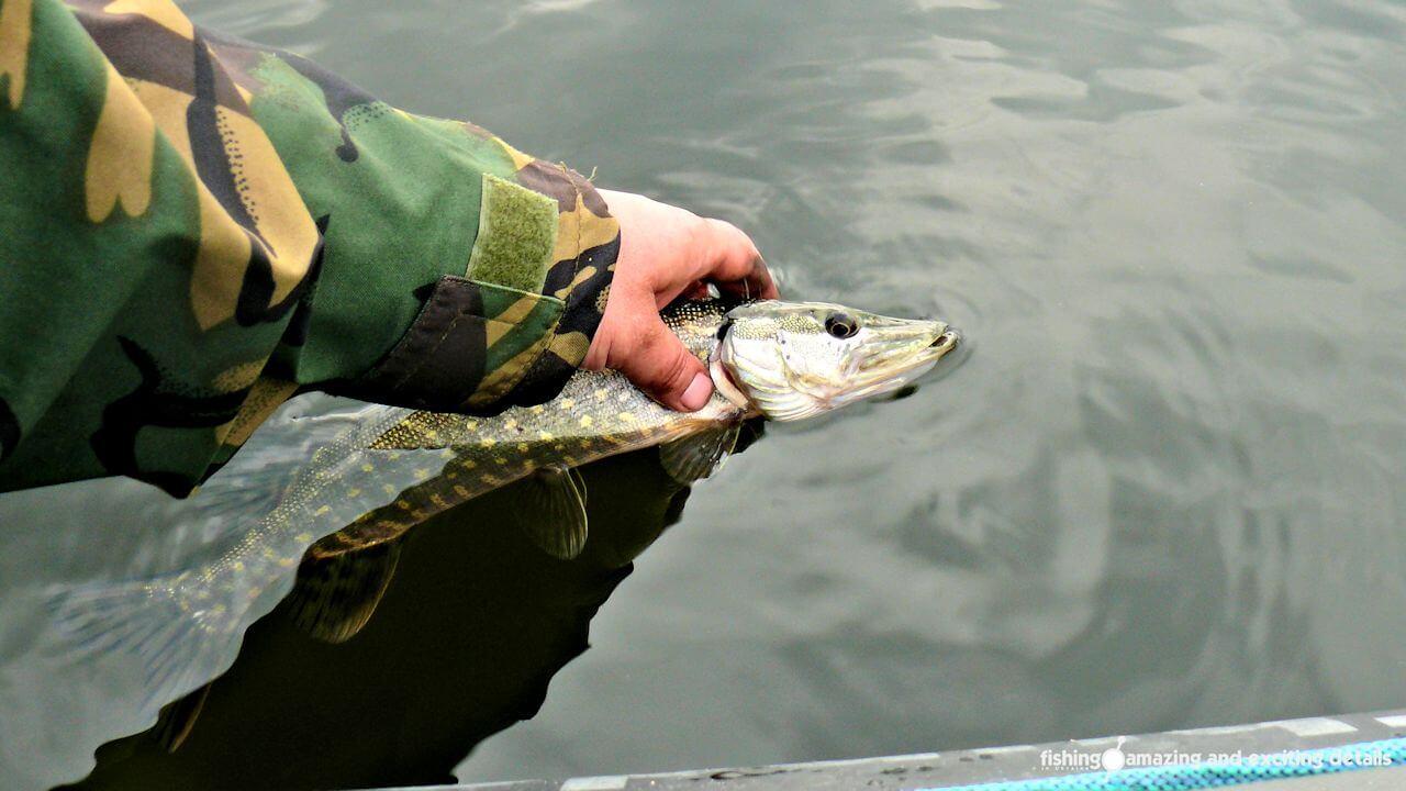 Как правильно обращаться с рыбой