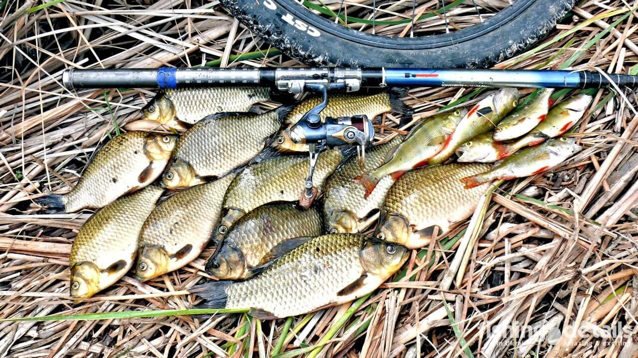 Рыбалка на реке Самара