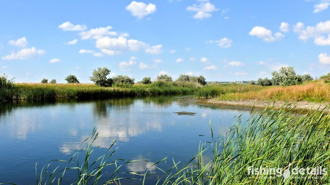 Фото Затока реки Самара