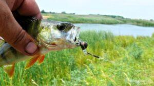 Рыбалка в Украине ФОТОФАКТ Крылатый джиг и swing impact