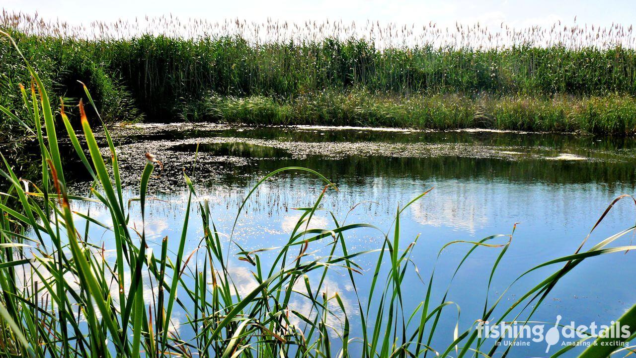 Фото Место для ловли линя