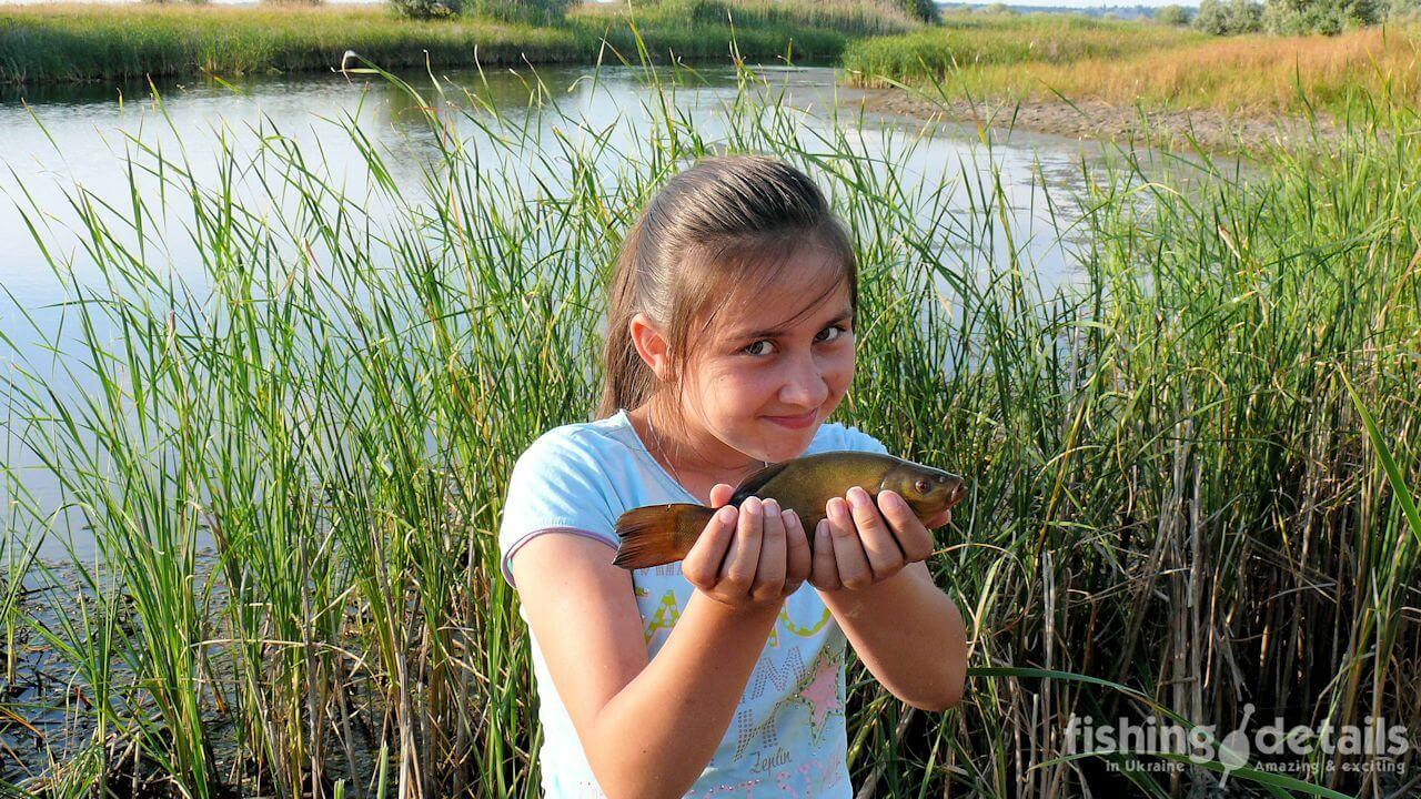 Ловля линя в Украине на поплавок
