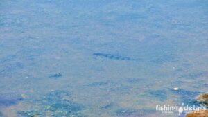 Фото окунь в воде