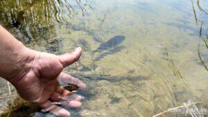 Рыбалка в Украине ФОТОФАКТ Окунь на Свободе