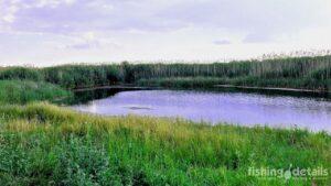 Ловля линя в Украине Место рыбалки
