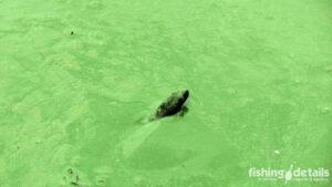 Фото змея в зеленой жиже