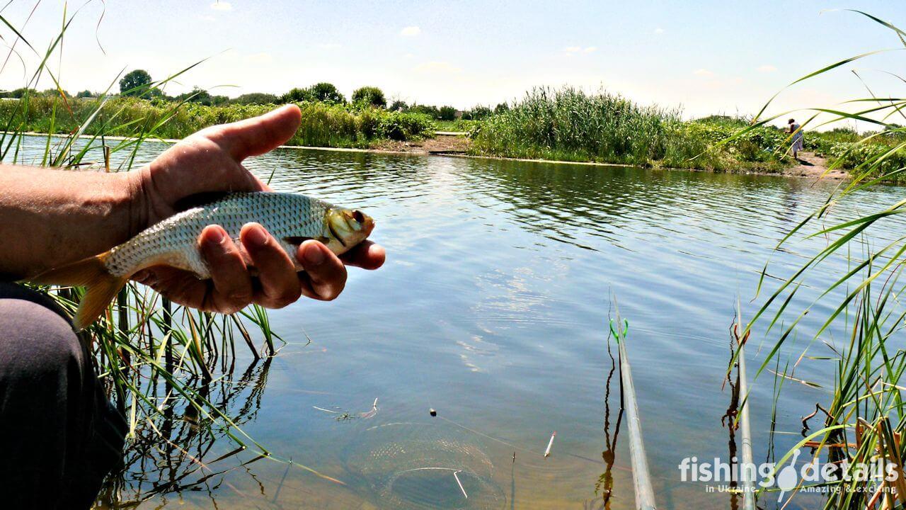 Рыбалка на Самаре — Богуславская плотва