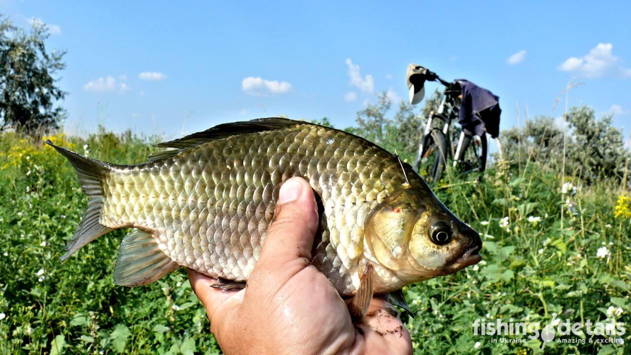 Рыбалка на Самаре — По следам Богуславского карася