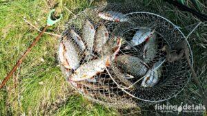 Рыбалка на Самаре — Улов плотвы в Богуславе
