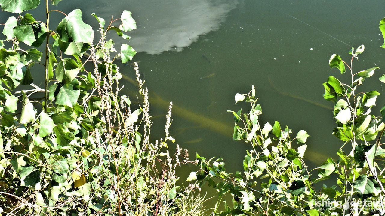 Голавли на реке Десна