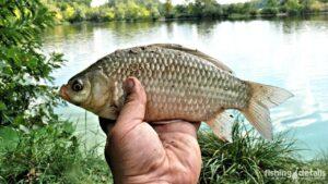 Фото | Рыбалка в Украине | Карась в Тягинке осень 2018