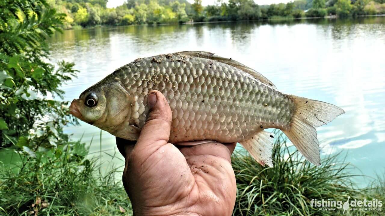 В поисках рыболовных приключений ⚓ — Тренировка на Днепре