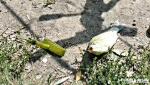 Фото | Рыбалка в Украине | Карась на метод