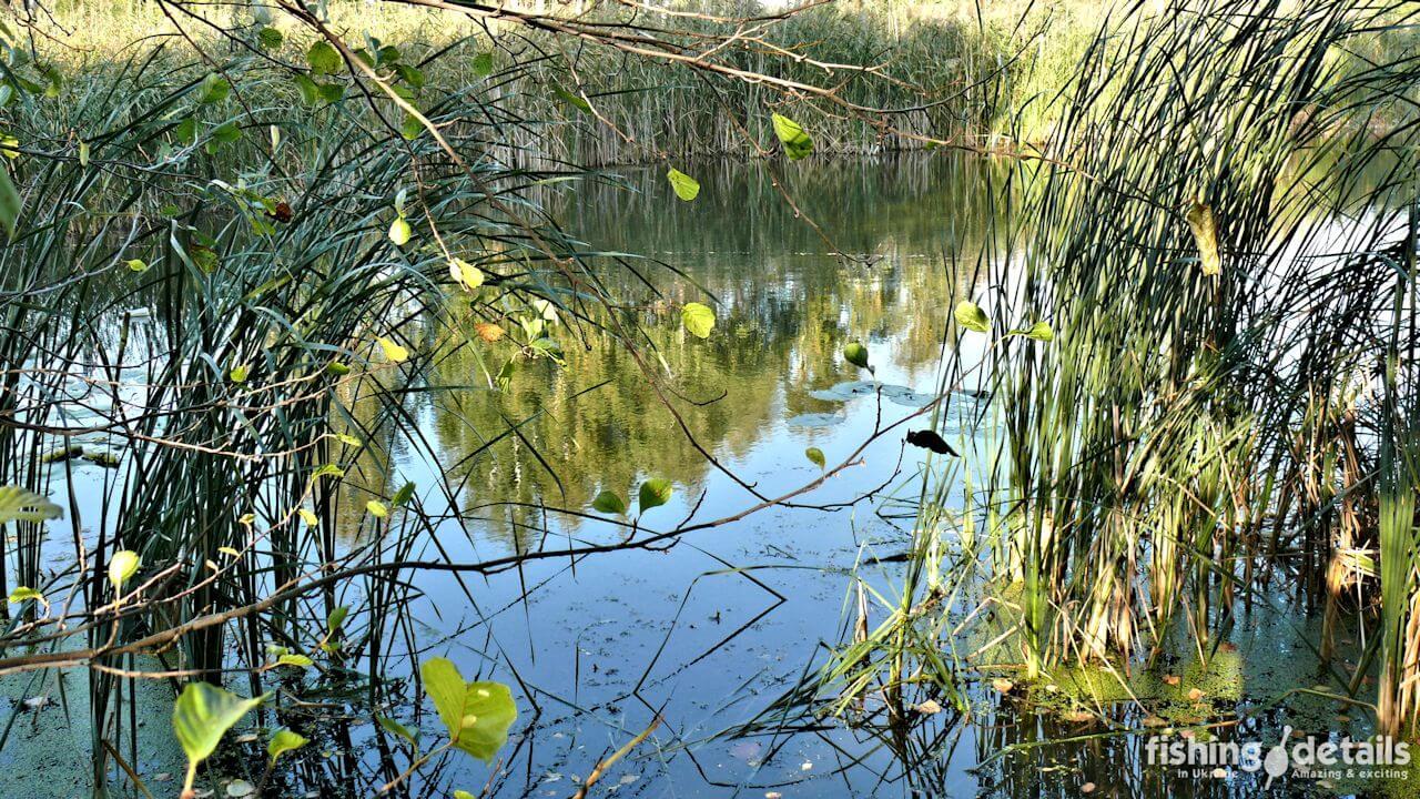 Река Мена в сентябре
