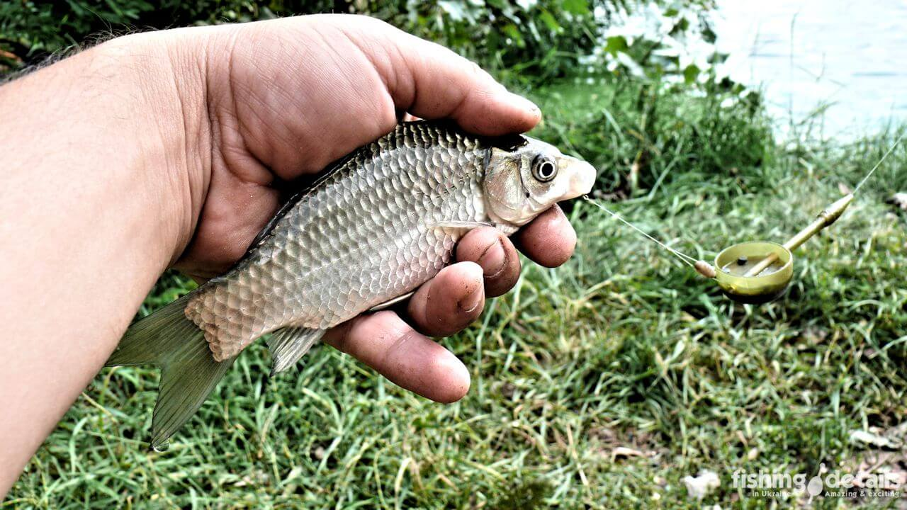 Фото | Рыбалка в Украине | Небольшой карась в руке
