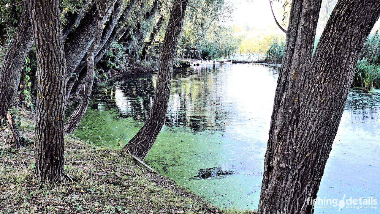 Река Мена