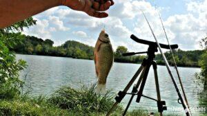 Фото | Рыбалка в Украине | Сентябрьский карась на Днепре