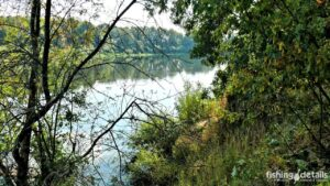 Река Десна в лесу