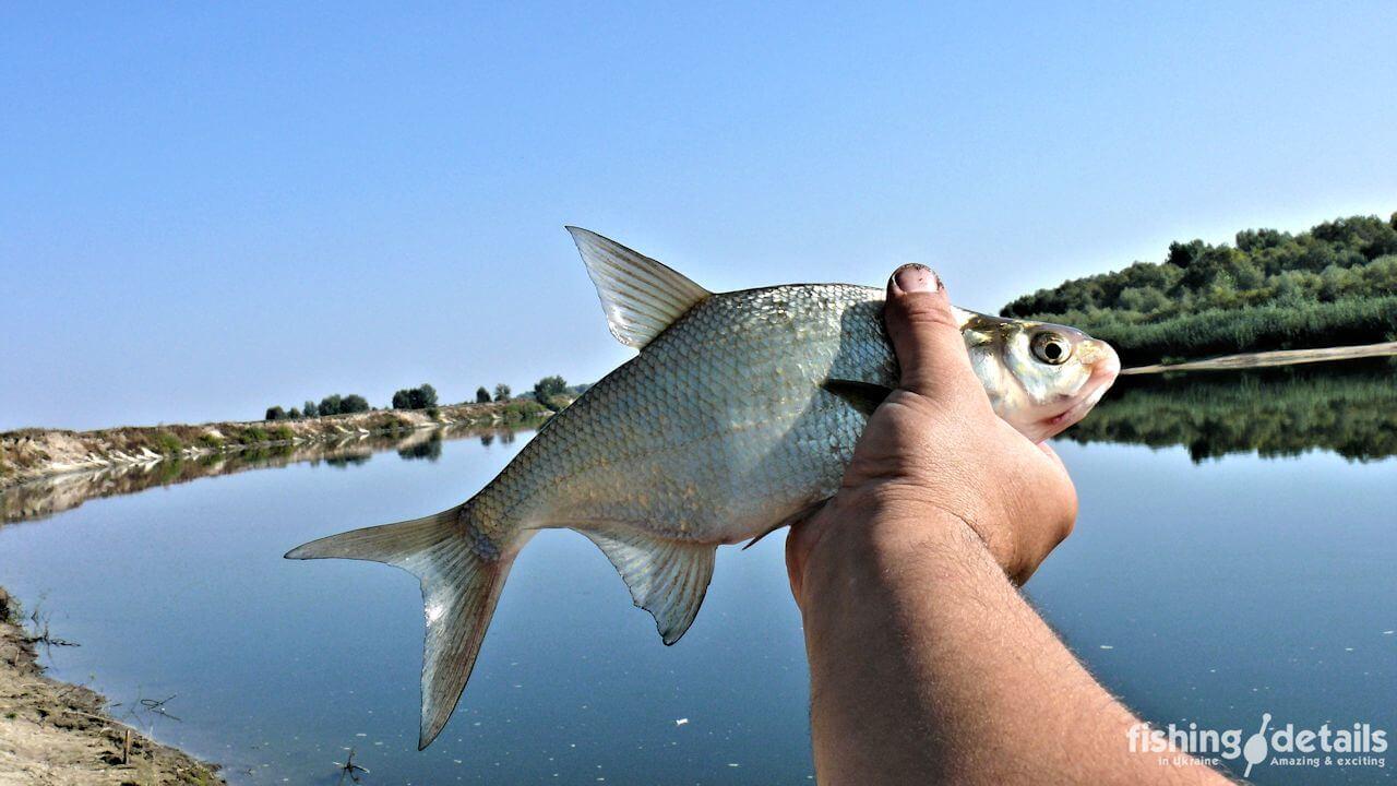 Рыбалка на Десне Первая рыба