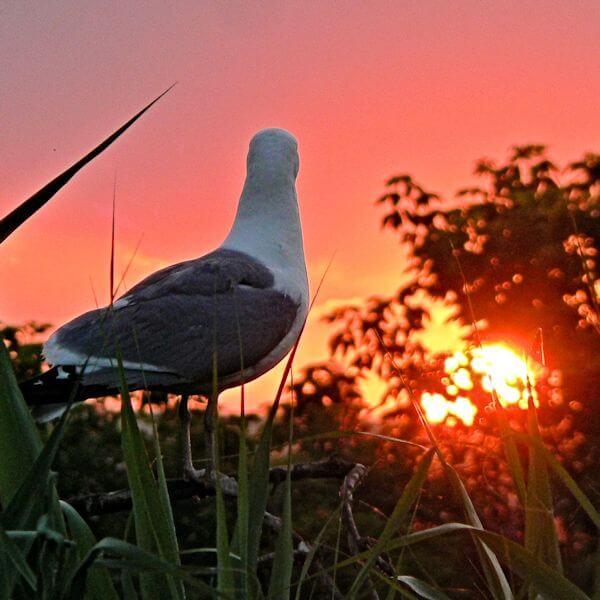 Фото Чайка встречает восход солнца