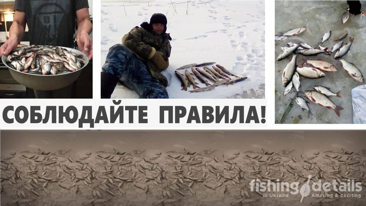 Товарищи пингвины и просто любители зимней рыбалки