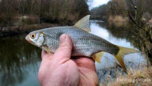 Рыбалка в марте на Самаре
