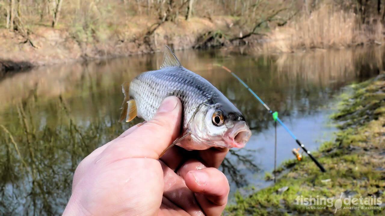 Первая рыбка 2019 года