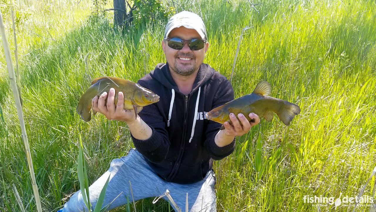Улов линей на рыбалке