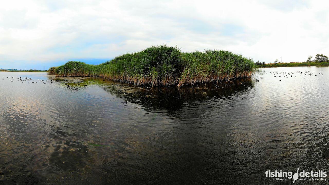 Утиный остров на Федоре