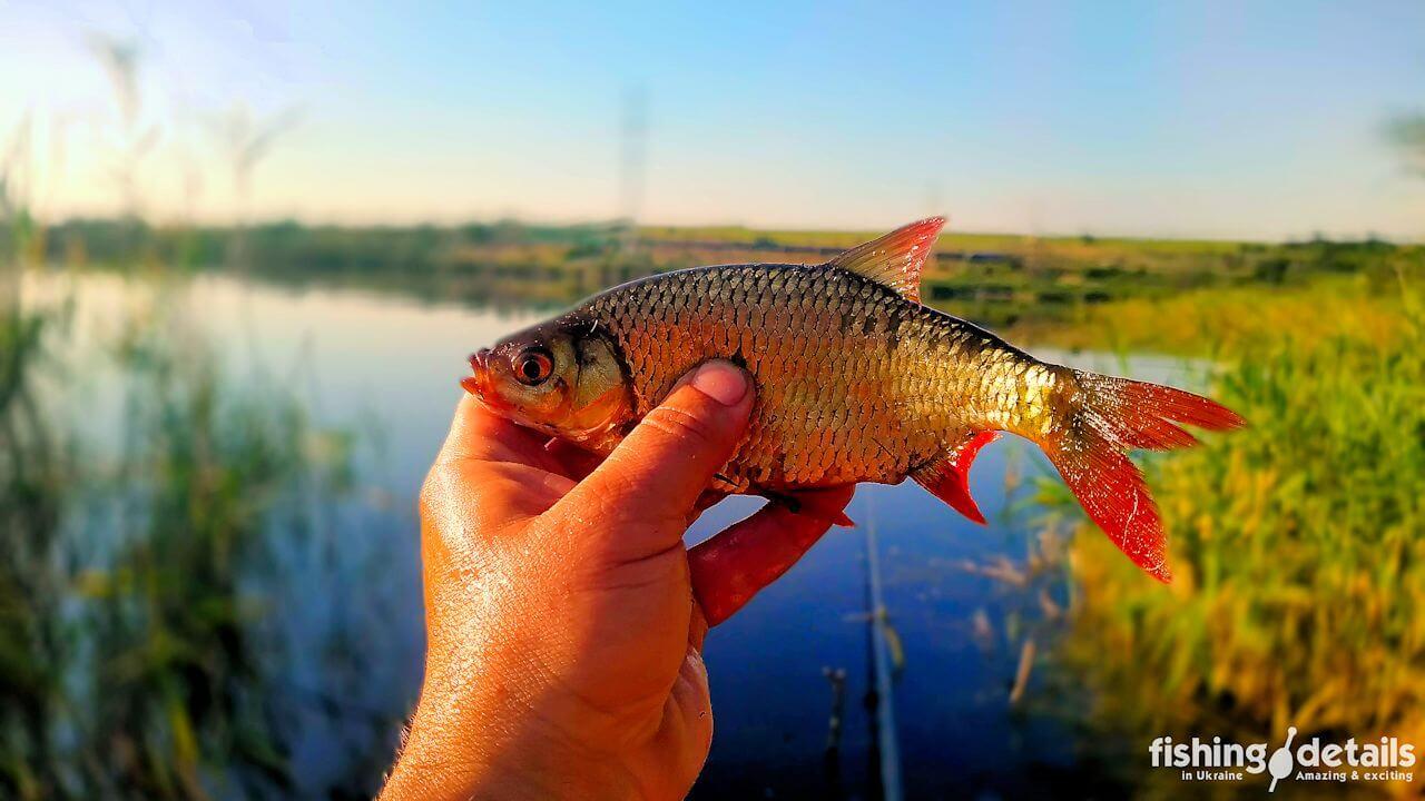 Рыбалка на Самаре
